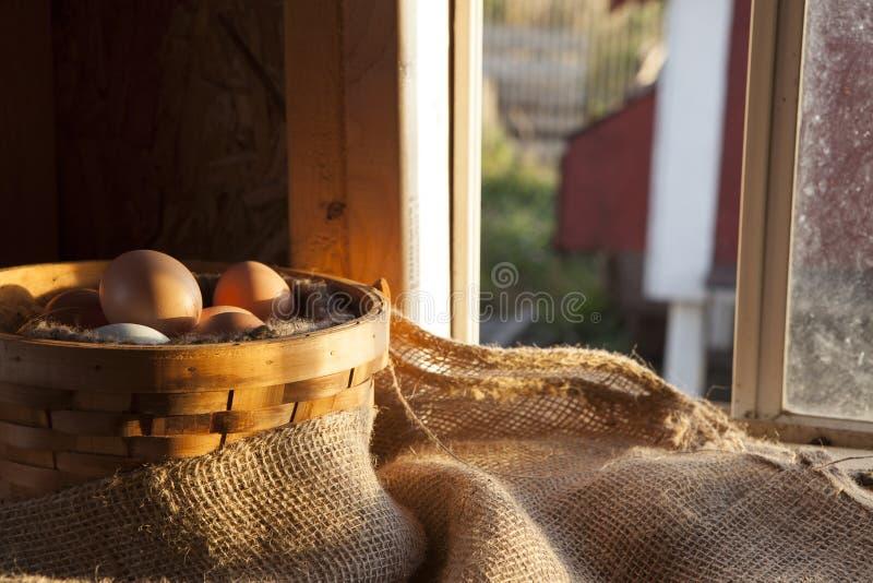 Αγροτικά φρέσκα αυγά στο καλάθι στο κοτέτσι στοκ εικόνες