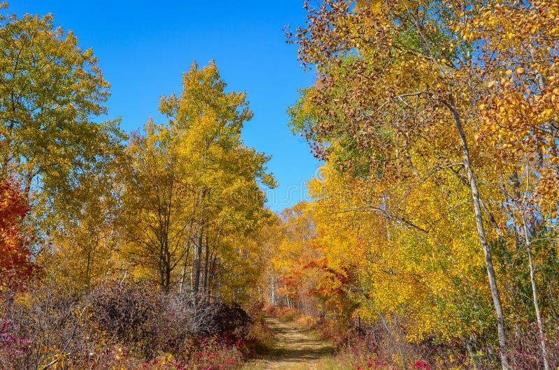 Αγροτικά χρωματισμένα φθινόπωρο δέντρα πορειών στοκ εικόνα