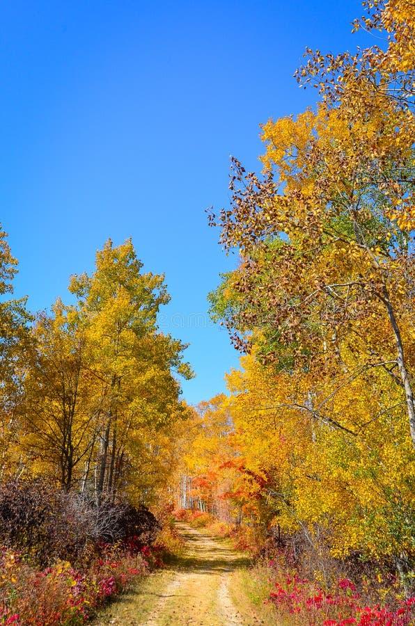Αγροτικά χρωματισμένα φθινόπωρο δέντρα πορειών στοκ φωτογραφία με δικαίωμα ελεύθερης χρήσης