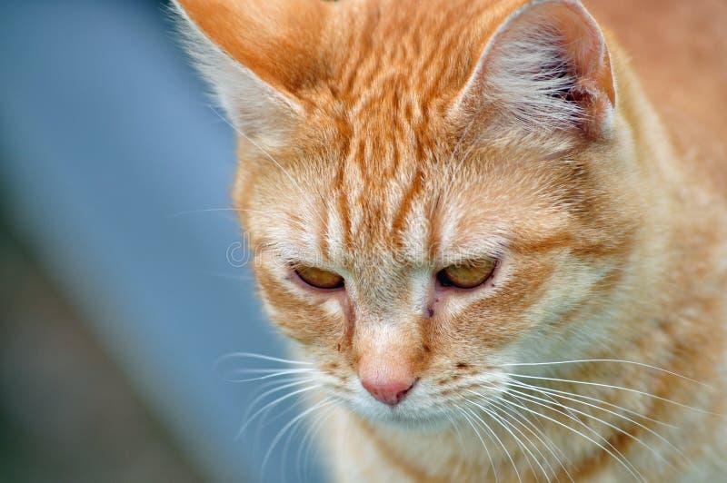 Αγροτική γάτα στοκ εικόνες με δικαίωμα ελεύθερης χρήσης
