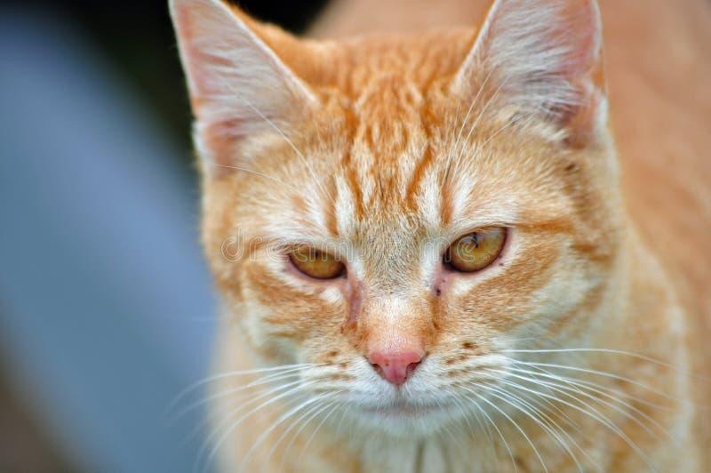 Αγροτική γάτα στοκ εικόνες