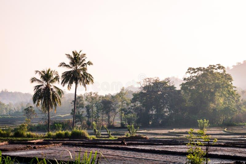 Αγροτική γη και δασική άποψη το ομιχλώδες πρωί στοκ εικόνα με δικαίωμα ελεύθερης χρήσης