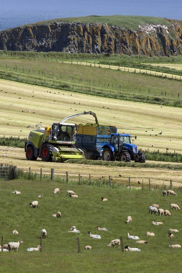 Αγροτική γη - κομητεία Antrim - Βόρεια Ιρλανδία στοκ φωτογραφία με δικαίωμα ελεύθερης χρήσης