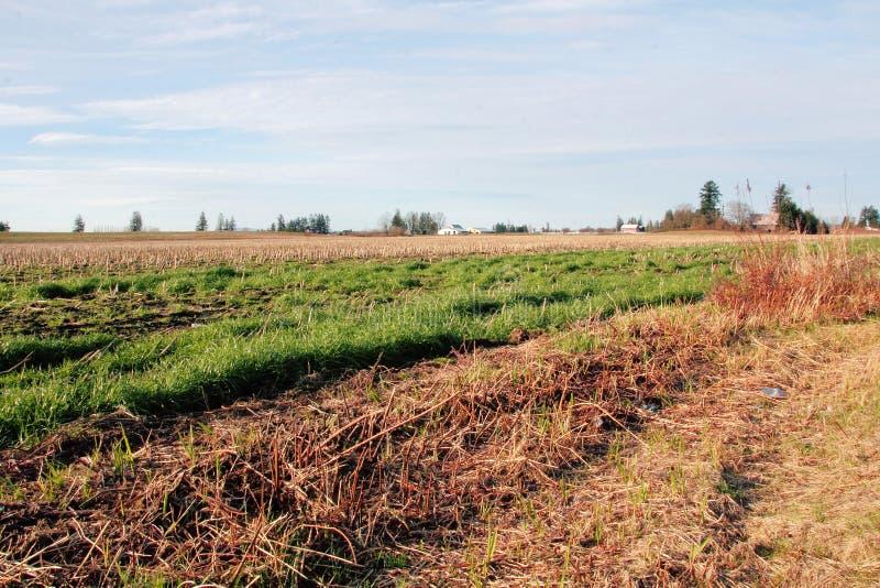 Αγροτική γη πολιτεία της Washington στοκ φωτογραφίες