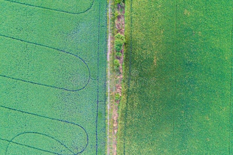 Αγροτική εναέρια άποψη ρυζιού στοκ φωτογραφίες με δικαίωμα ελεύθερης χρήσης