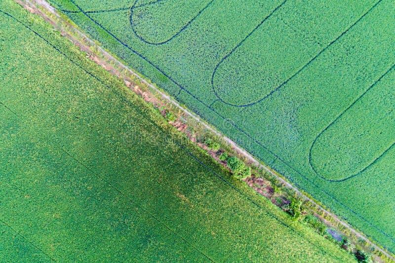 Αγροτική εναέρια άποψη ρυζιού στοκ εικόνες με δικαίωμα ελεύθερης χρήσης