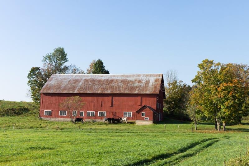 Αγροτική κόκκινη σιταποθήκη και γαλακτοκομικές αγελάδες στοκ φωτογραφία με δικαίωμα ελεύθερης χρήσης