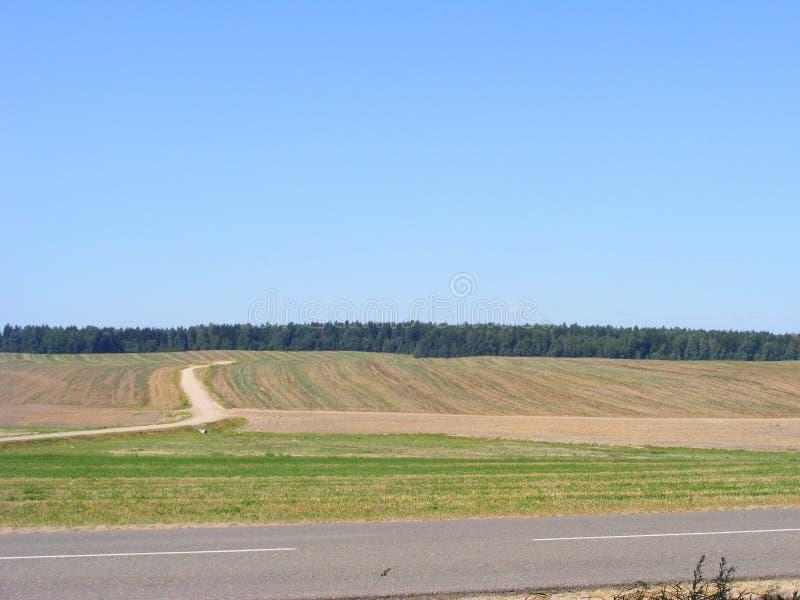 Αγροτικοί αγροτικός τομέας και οδικό τοπίο τοπίο φυσικό Πράσινη χλόη πράσινος σίτος πεδίων λεπτομερής άσφαλτος δομή οδικού τετραγ στοκ εικόνες