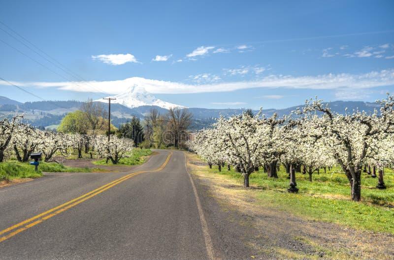 Αγροτικός δρόμος, οπωρώνες μήλων, όρος κουκούλα στοκ φωτογραφία με δικαίωμα ελεύθερης χρήσης