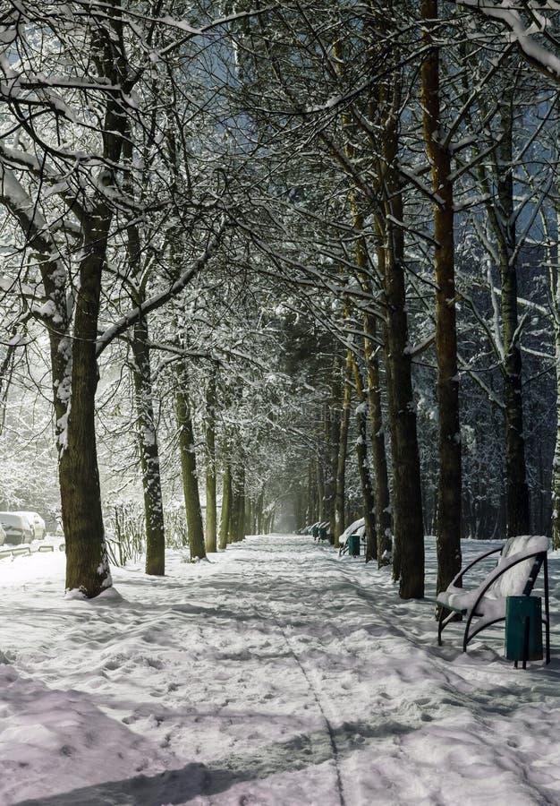 Αγροτικός δρόμος στο χιόνι τη νύχτα στοκ φωτογραφία με δικαίωμα ελεύθερης χρήσης