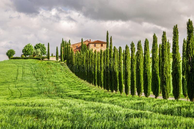 Αγροτικός τουρισμός στην Τοσκάνη με τα κυπαρίσσια στοκ εικόνα με δικαίωμα ελεύθερης χρήσης
