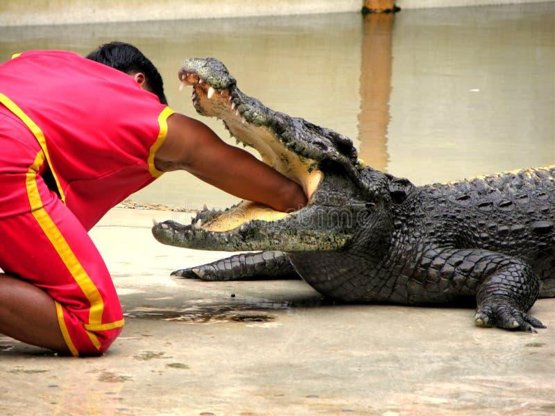αγροτικός samutprakan ζωολογικός κήπος 5 κροκοδείλων στοκ φωτογραφίες