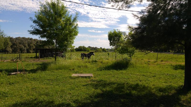 Αγροτικό άλογο ηλιόλουστο στοκ εικόνα