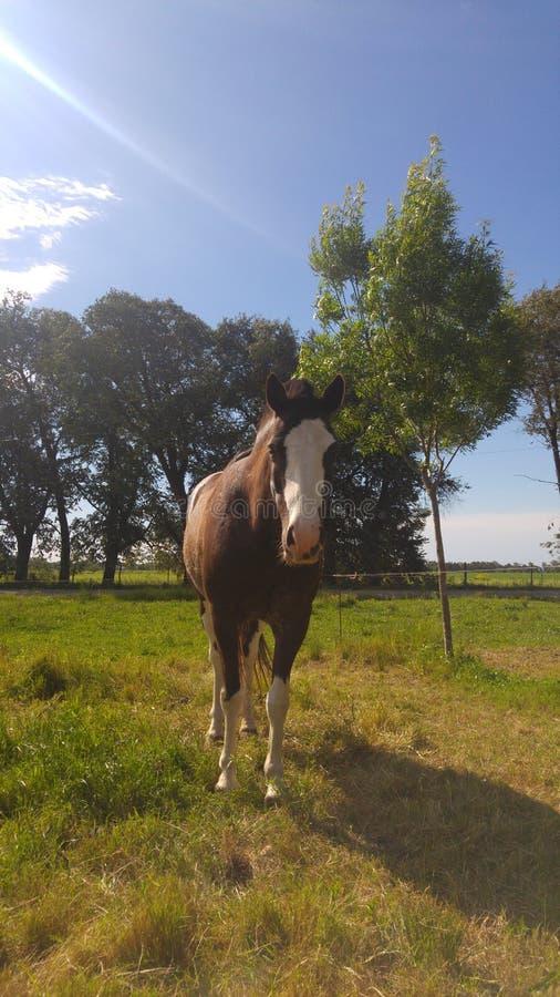 Αγροτικό άλογο ηλιόλουστο στοκ εικόνα με δικαίωμα ελεύθερης χρήσης
