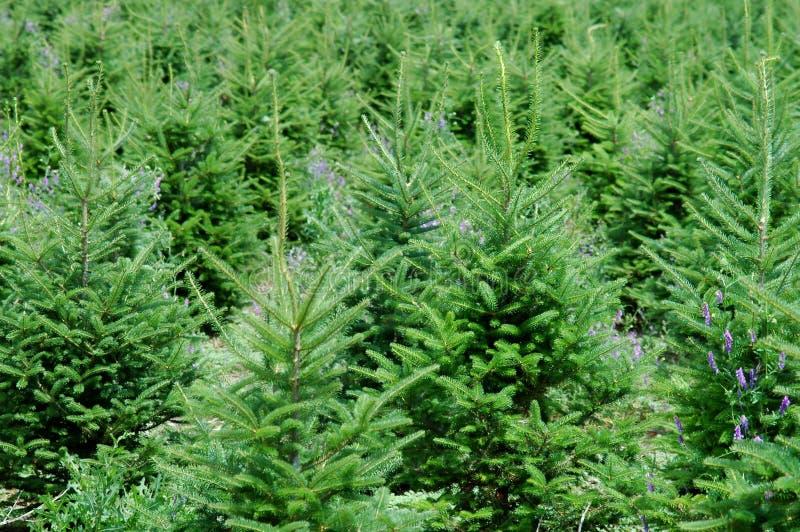 αγροτικό δέντρο Χριστουγέννων στοκ εικόνες με δικαίωμα ελεύθερης χρήσης