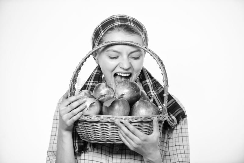 Αγροτικό καλάθι λαβής ύφους κηπουρών γυναικών με τα μήλα στο άσπρο υπόβαθρο Ο χωρικός γυναικών φέρνει τα φυσικά φρούτα καλαθιών στοκ εικόνες