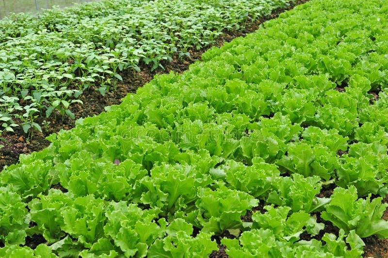 Download αγροτικό λαχανικό στοκ εικόνες. εικόνα από συγκομιδή - 17058684