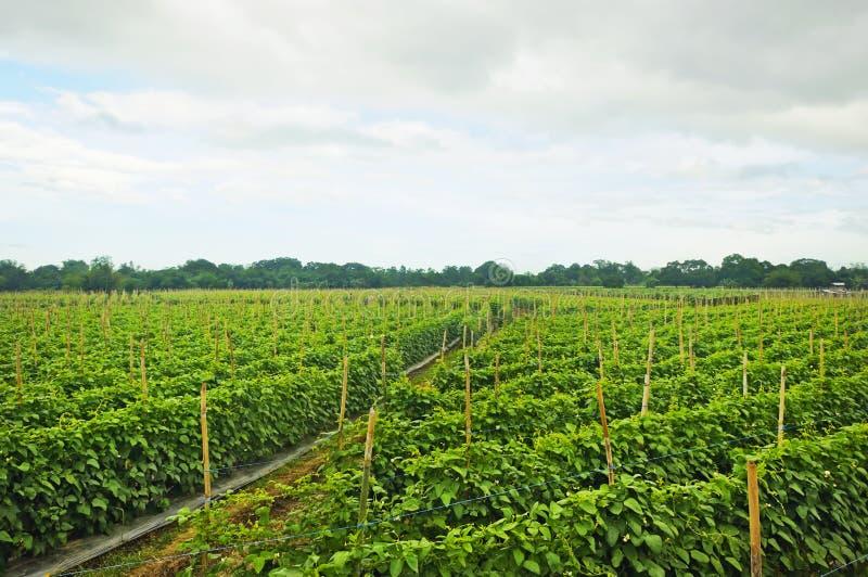 αγροτικό λαχανικό στοκ φωτογραφία με δικαίωμα ελεύθερης χρήσης