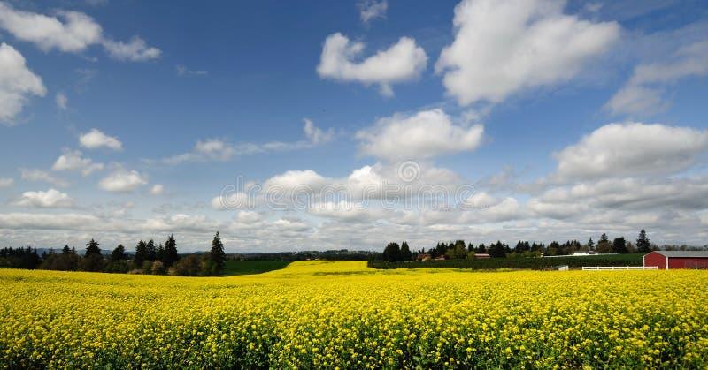 αγροτικό πεδίο πτώσεων κοντά στο ασήμι στοκ φωτογραφίες με δικαίωμα ελεύθερης χρήσης
