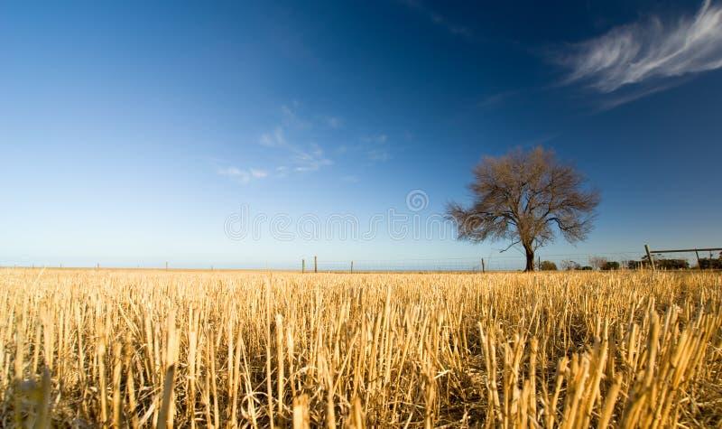 Αγροτικό πεδίο στοκ εικόνα