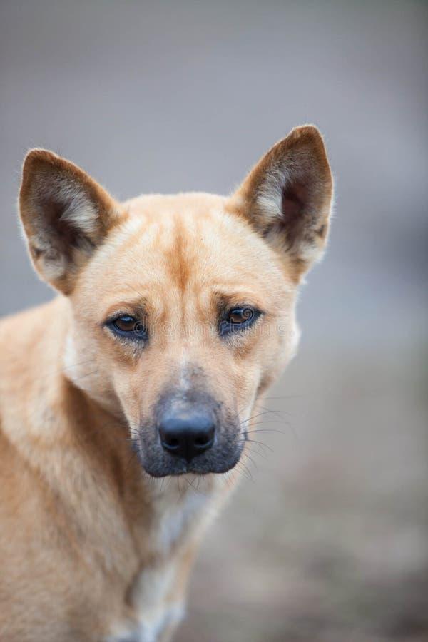 Αγροτικό σκυλί στοκ φωτογραφία με δικαίωμα ελεύθερης χρήσης