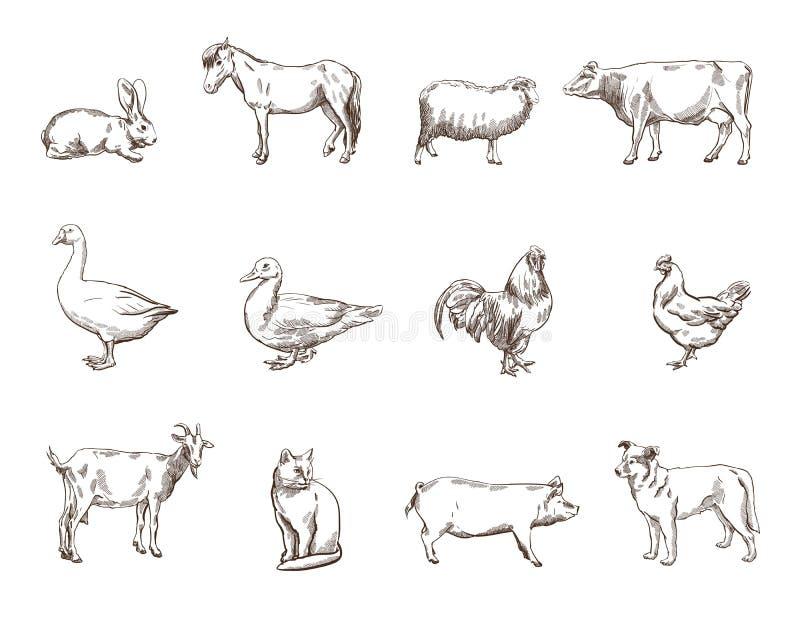 αγροτικό τοπίο ζώων καλοκαίρι πολλών sheeeps στοκ φωτογραφίες με δικαίωμα ελεύθερης χρήσης