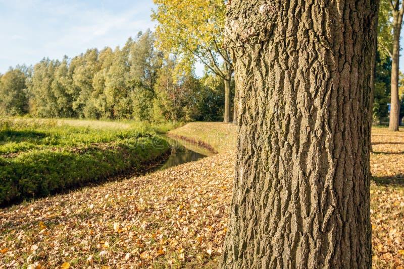 Αγροτικό τοπίο με μια κυρτή εποχή τάφρων το φθινόπωρο στοκ φωτογραφίες με δικαίωμα ελεύθερης χρήσης