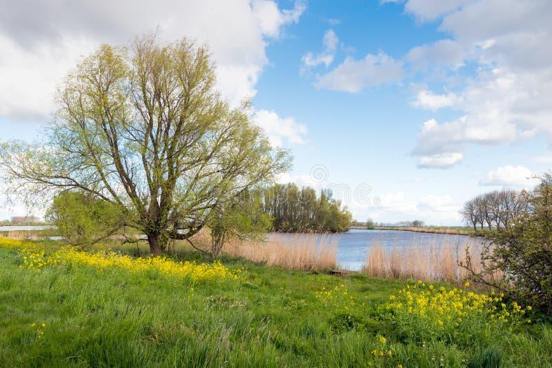 Αγροτικό τοπίο με τα γυμνά, βλαστάνοντας και ανθίζοντας δέντρα στοκ φωτογραφία