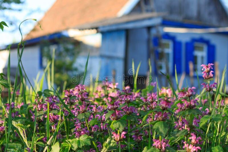 Αγροτικό τοπίο με την ανθίζοντας χλόη και ένα αγροτικό σπίτι στοκ εικόνες