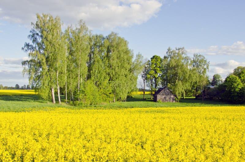 Αγροτικό τοπίο με τη σιταποθήκη και το πεδίο βιασμών στοκ εικόνα με δικαίωμα ελεύθερης χρήσης