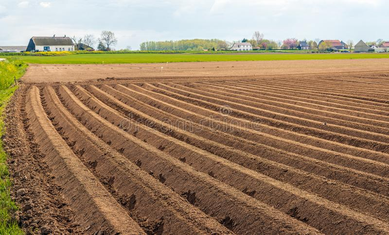 Αγροτικό τοπίο με τις κορυφογραμμές πατατών στο πρώτο πλάνο στοκ εικόνα με δικαίωμα ελεύθερης χρήσης