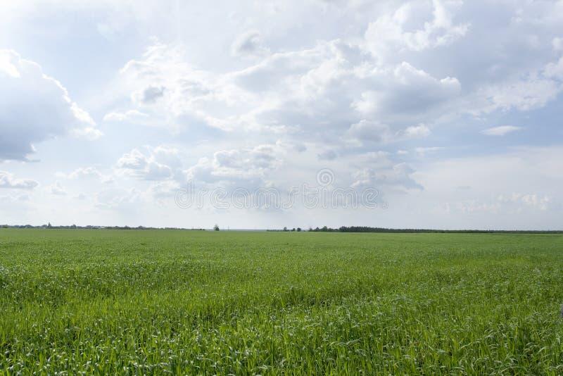 Αγροτικό τοπίο με τον τομέα καλαμποκιού, κανένας, κενό υπόβαθρο με το διάστημα αντιγράφων στοκ φωτογραφίες με δικαίωμα ελεύθερης χρήσης