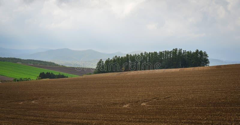 Αγροτικό τοπίο σε Biei, Hokkaido, Ιαπωνία στοκ φωτογραφία