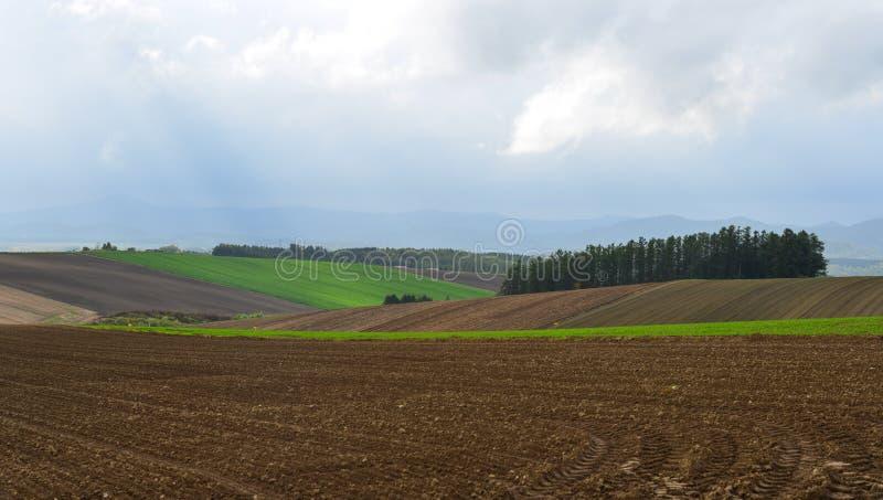 Αγροτικό τοπίο σε Biei, Hokkaido, Ιαπωνία στοκ φωτογραφίες