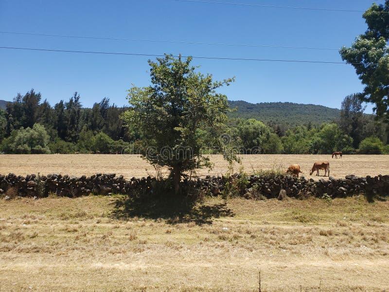 αγροτικό τοπίο σε Michoacan, Μεξικό σε μια ηλιόλουστη ημέρα στοκ εικόνες