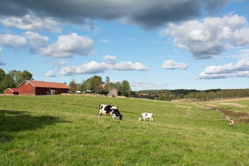 Αγροτικό τοπίο στη Σουηδία στοκ φωτογραφία με δικαίωμα ελεύθερης χρήσης