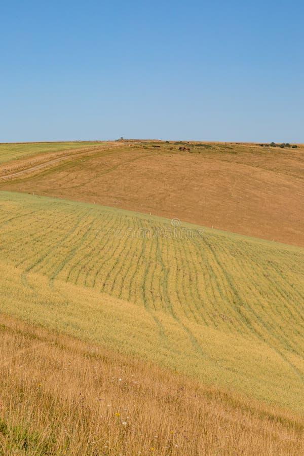 Αγροτικό τοπίο του Σάσσεξ στοκ φωτογραφίες με δικαίωμα ελεύθερης χρήσης