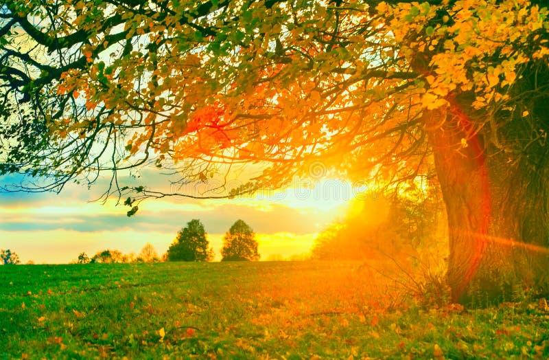 Αγροτικό τοπίο φθινοπώρου στοκ εικόνες