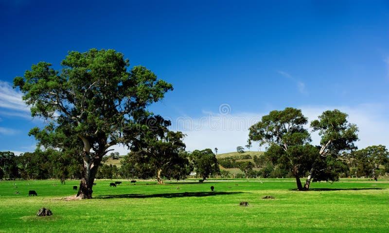 αγροτικό τοπίο στοκ φωτογραφίες με δικαίωμα ελεύθερης χρήσης