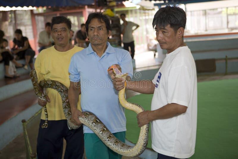 αγροτικό φίδι της Μπανγκόκ στοκ εικόνες