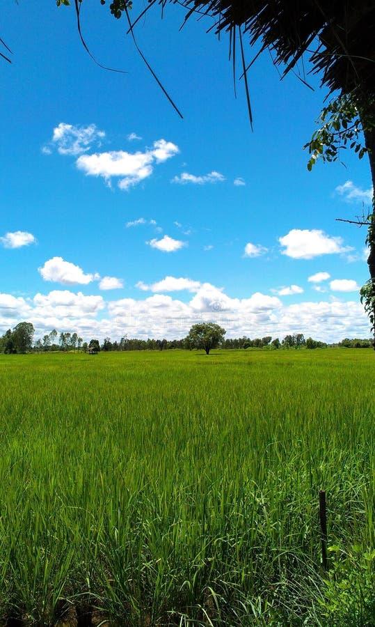 Αγροτικό Cornfield στοκ εικόνες με δικαίωμα ελεύθερης χρήσης