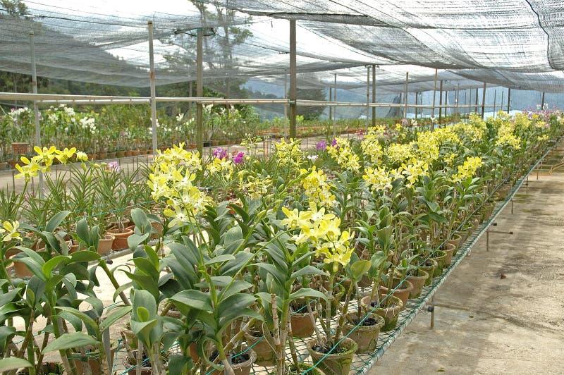 αγροτικό orchid στοκ εικόνες