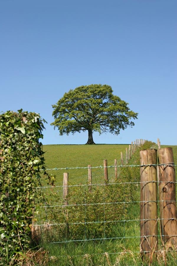 αγροτικό vista στοκ εικόνα με δικαίωμα ελεύθερης χρήσης