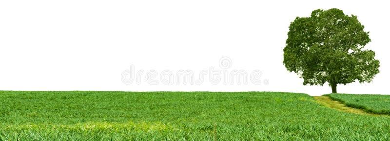 Αγρόκτημα ανανά πανοράματος, τομέας φρούτων με το δέντρο μάγκο στοκ φωτογραφία με δικαίωμα ελεύθερης χρήσης