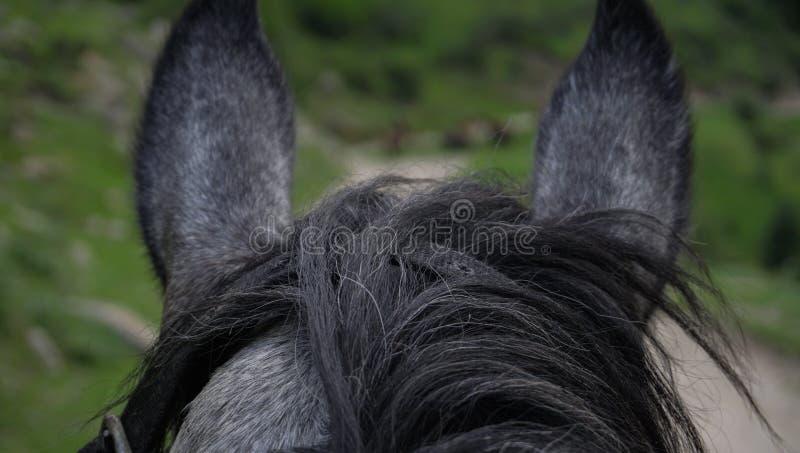Αγρόκτημα αλόγων Head στοκ εικόνες με δικαίωμα ελεύθερης χρήσης