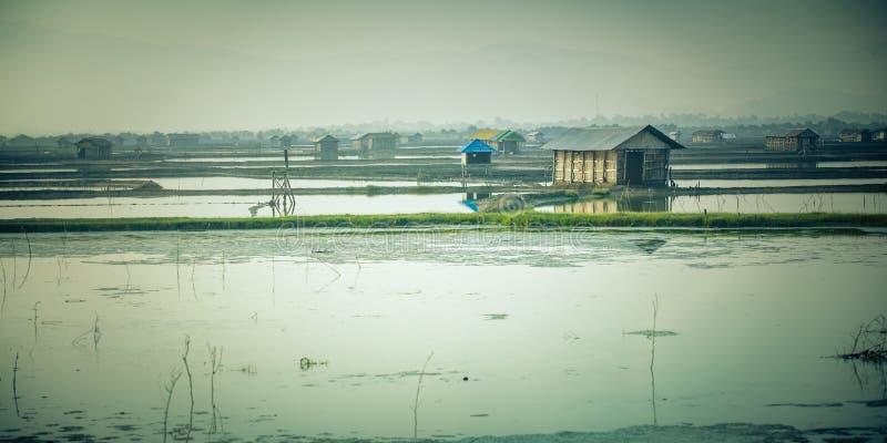 Αγρόκτημα γαρίδων με τις λίμνες στοκ εικόνες με δικαίωμα ελεύθερης χρήσης