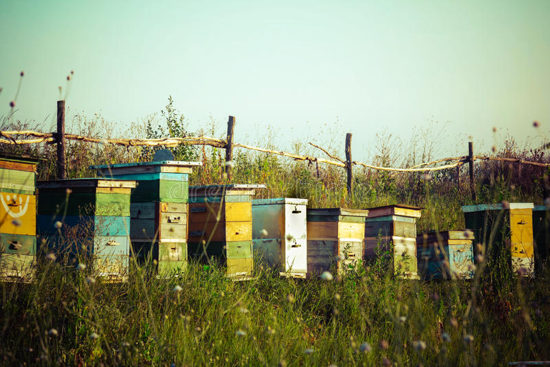 Αγρόκτημα θερινών μελισσουργείων στοκ φωτογραφία με δικαίωμα ελεύθερης χρήσης