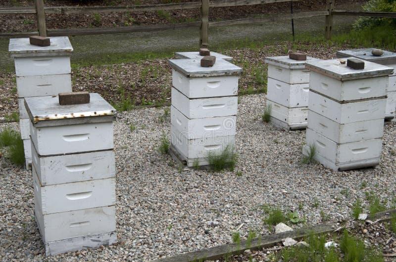 Αγρόκτημα κιβωτίων κυψελών μελισσών στοκ εικόνες