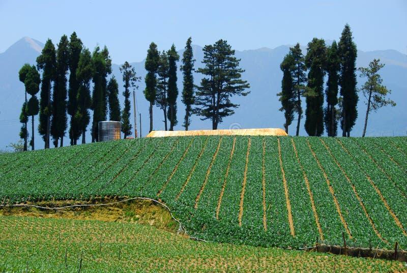 Αγρόκτημα λάχανων του fushoushan αγροκτήματος, Ταϊβάν στοκ φωτογραφία με δικαίωμα ελεύθερης χρήσης