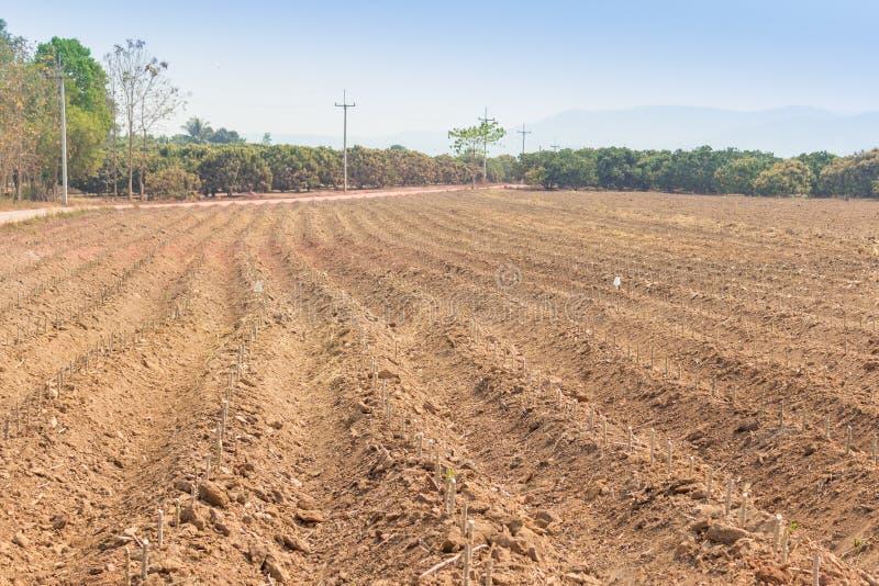 Αγρόκτημα μανιόκων στοκ φωτογραφία
